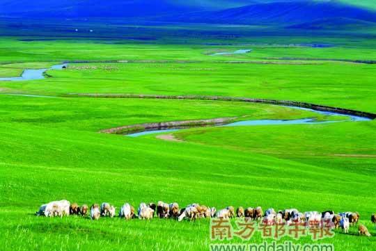 六月草原牧群