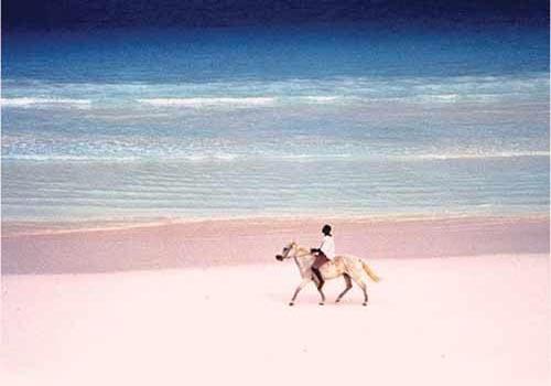 粉红色的沙滩