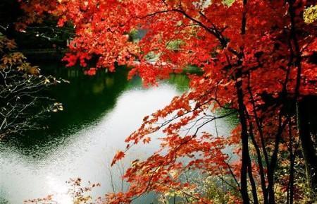 拍摄枫叶人少景美的最佳地点 我亲历的本溪之旅