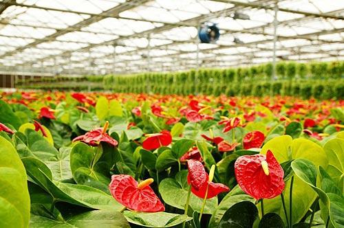 南宫温室珍奇花卉