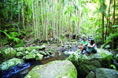 热带雨林:呼吸大自然气息