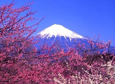 日本:早春三月樱花飞扬