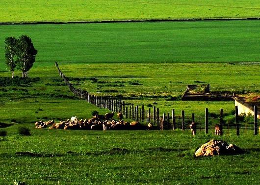 昭苏迷人的草原