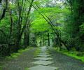日本京都浓郁的风情