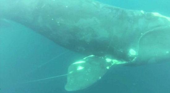 折纸鲸鱼的步骤图解