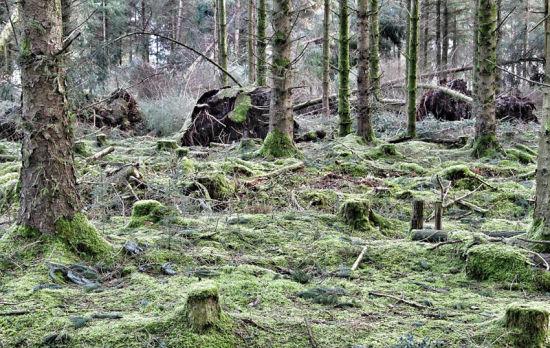 余大树被狂风连根拔起