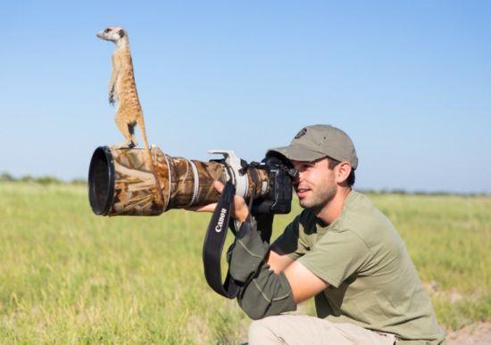 野生动物摄影师非洲近距离实拍萌物狐獴