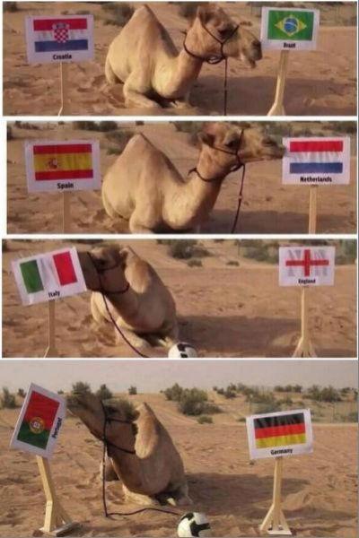 可怜的神兽骆驼…