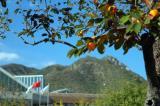 图文-太伟高尔夫球场美景图丰收的季节