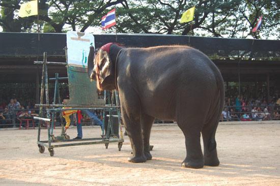 图文-观看泰国大象可爱表演 大象作画