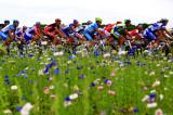 赛道边五彩斑斓的小花