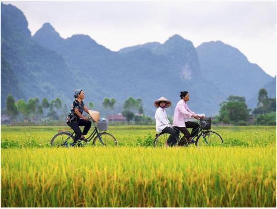 自行车仍然是越南农村地区常见的交通工具。