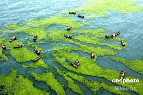 中国海事部门从九省市调运围油栏围控海面浒苔